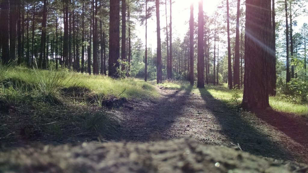 Sunlight shining through to path in forrest