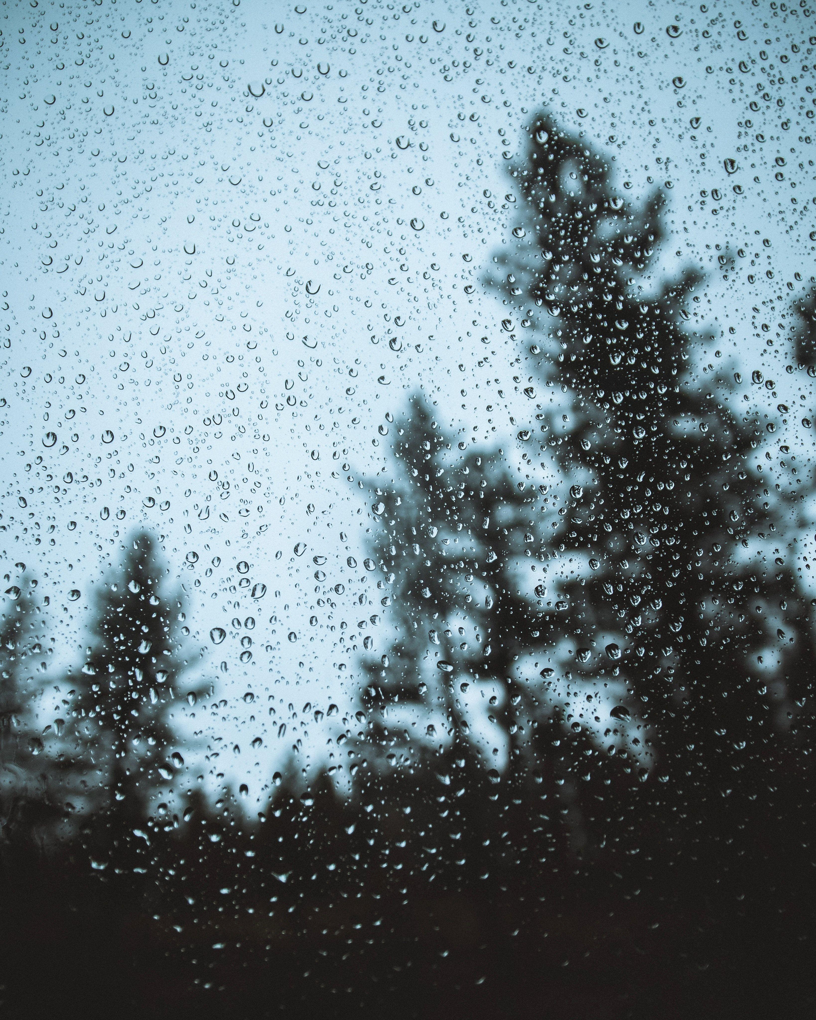 Evergreen trees behind a rainy window